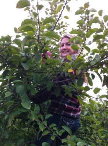 Apple Picking3