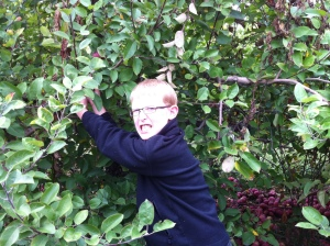 Apple Picking6